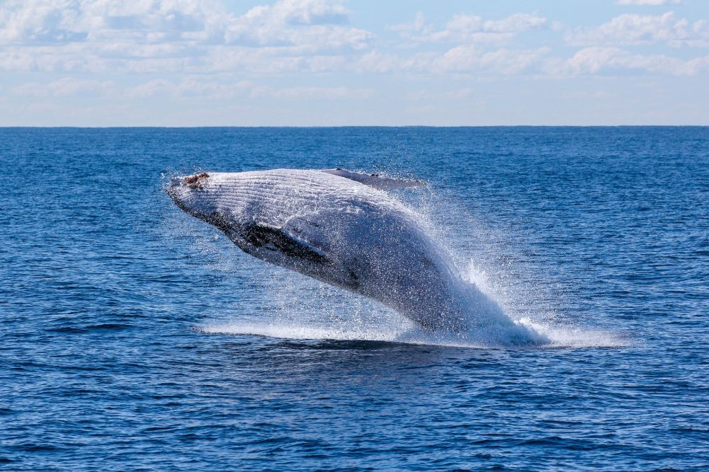 software migration time like the whales